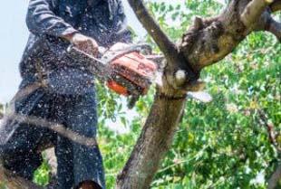 Corte de árvores – a autorização é realmente necessária?